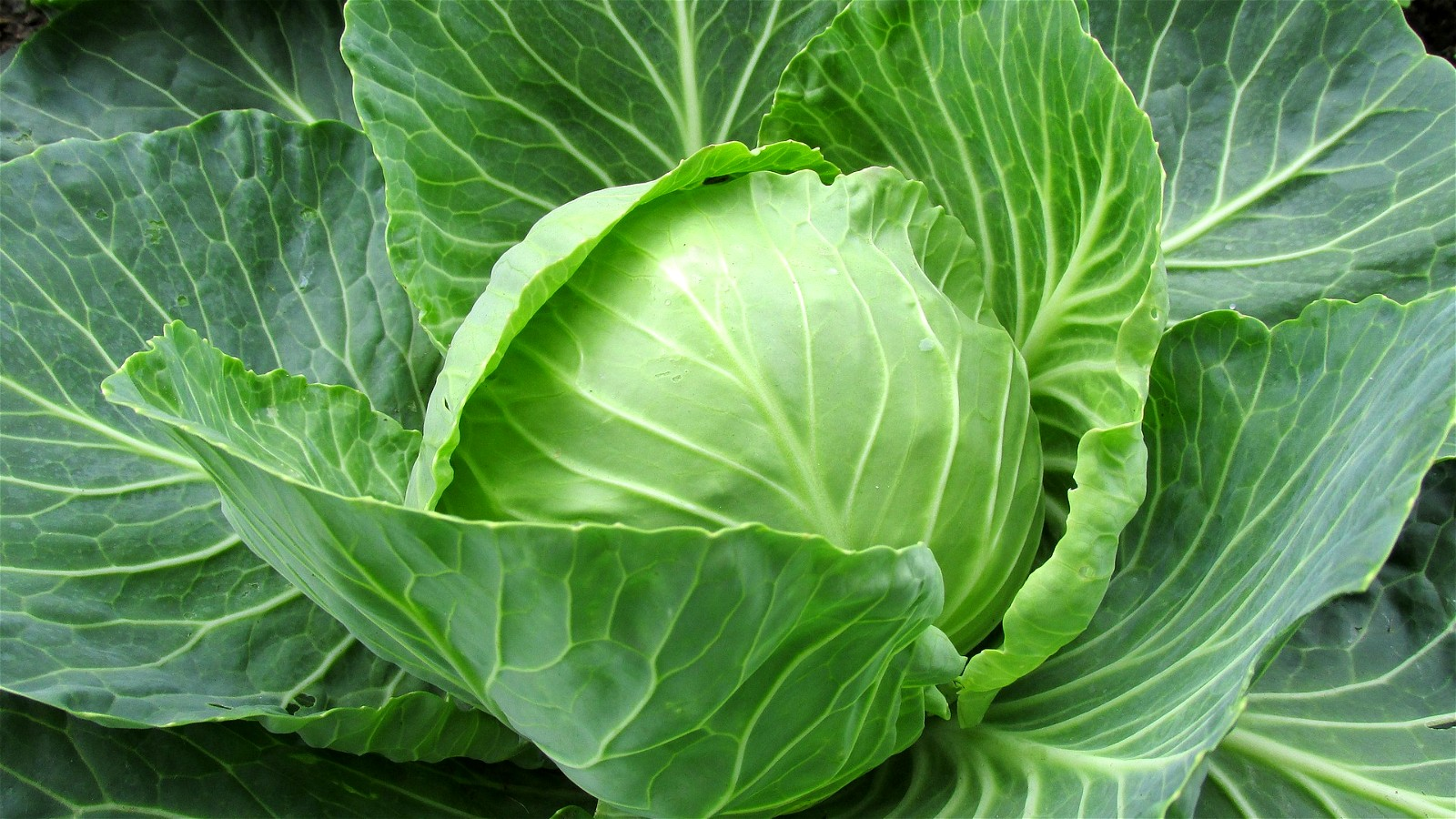 Image of Cabbage Curry